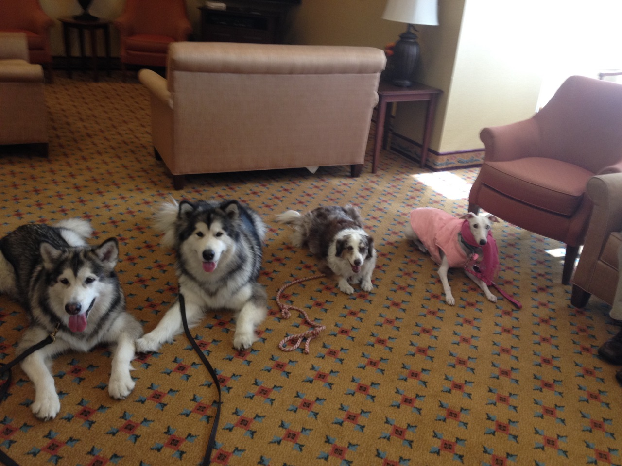 Therapy Dog Team